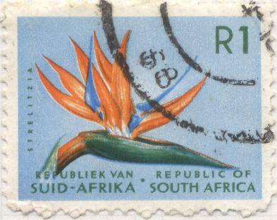 South Africa - Bird of Paradise, Strelitzia reginae