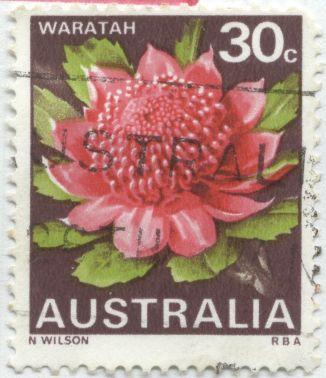 Australia - Telopea speciosissima