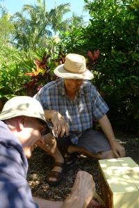Jerry and Dr Tim Herd (www.sugarbag.net) splitting stingless bee hives