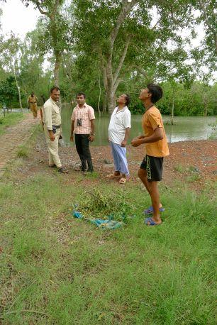 Harvesting Sonneratia apetala fruit (flavouring for curries) near Buri Goalini, Bangladesh