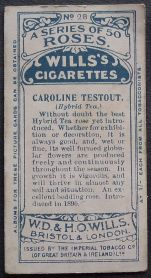 Rose, Caroline Testout