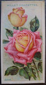 Rose, Juliet, Hybrid Tea