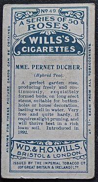 Rose, Madame Pernet Ducher