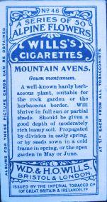 Mountain avens, Geum montanum, Wills' Alpine Flowers, 1913
