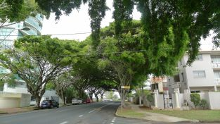 Urban forests make cities more habitable