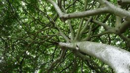 trees reduce summer heat by up to 7C