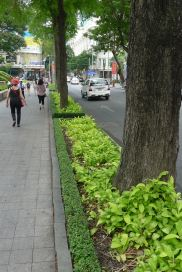 Posh nature strip: Philodendron, Ho Chi Minh City, Vietnam