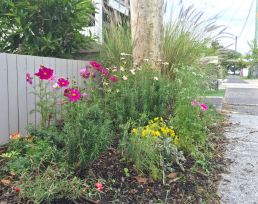 """Vandal-proof but pretty"" - a subtropical cottage verge planted by Paula and her grand daughter."