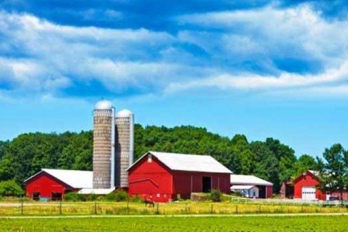 Farm pic