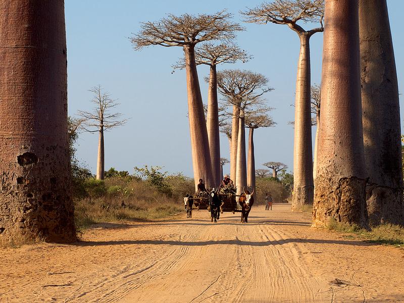 Lune de miel Madagascar Afrique