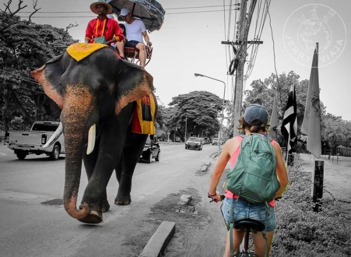Dos turismos diferentes, unos alquilan para ir en bicicleta, otros para viajar a lomos de un elefante.