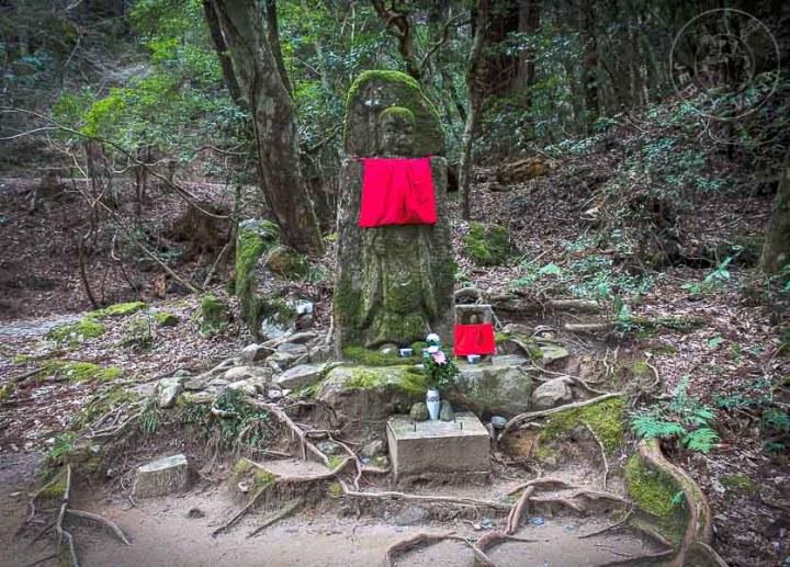 Bosque primitivo Kasuga-yama en Nara, Japón