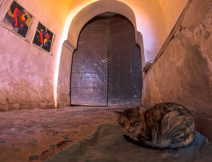 Gatos guardian de la Kasbah Taourirt .