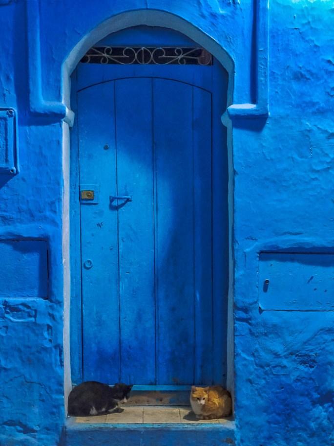 Gatos, Marruecos