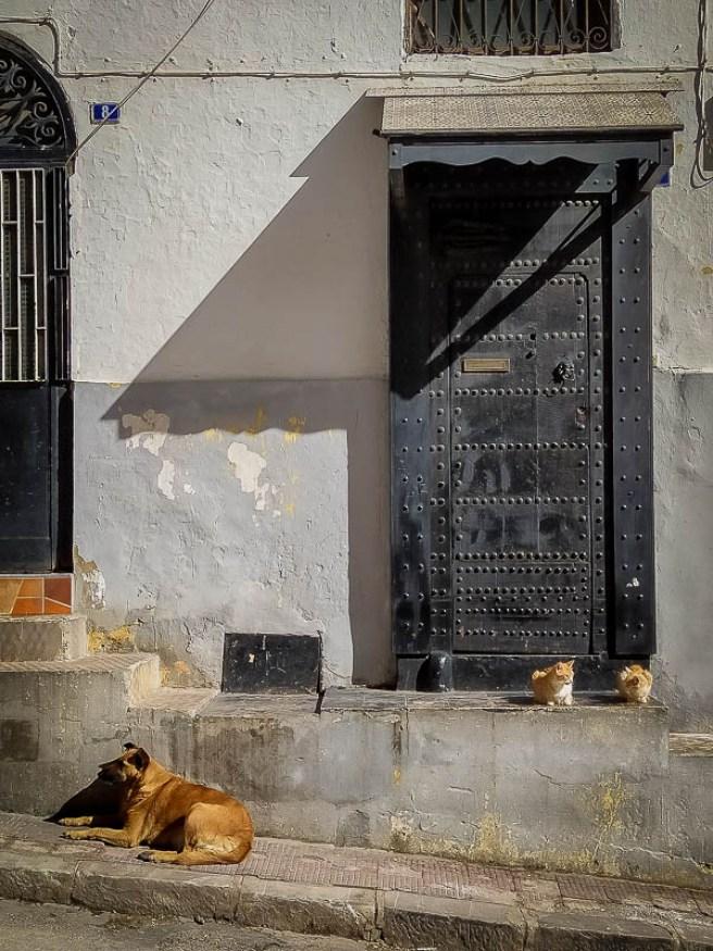 Gatos y perro de la comunidad en Tánger. Marruecos