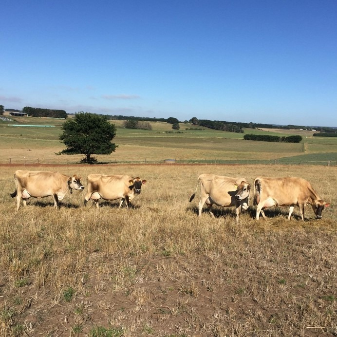 Jersey Australia Photo Competition Examples