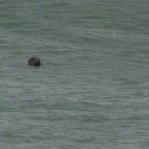 Seal getting a look in