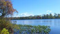 carnegie lake again