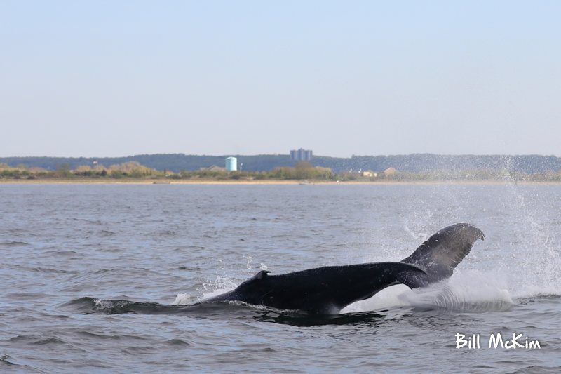 jersey shore whale watch