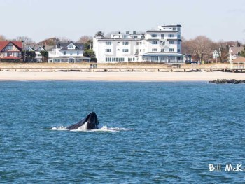 Whale watching spring lake new jersey bill mckim tour