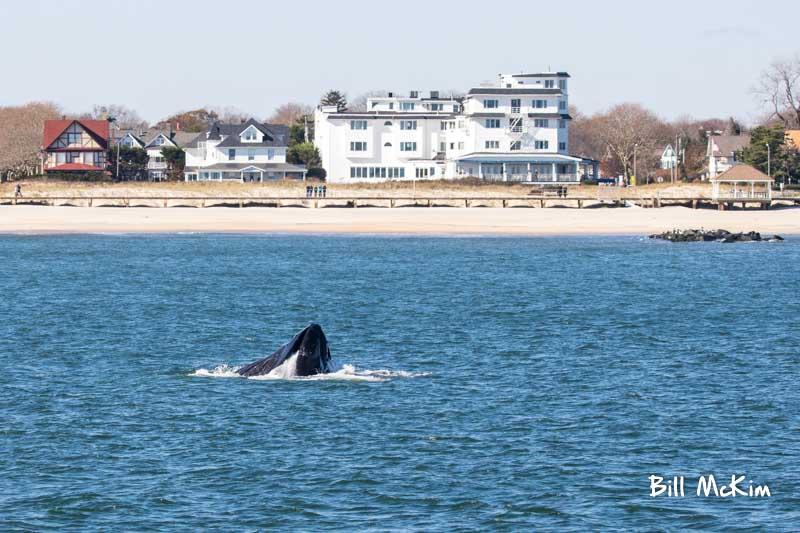 Whale watching spring lake new jersey bill mckim tour