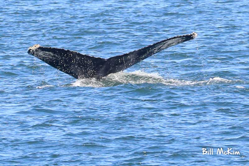 spring lake new jersey whale photos by bill mckim