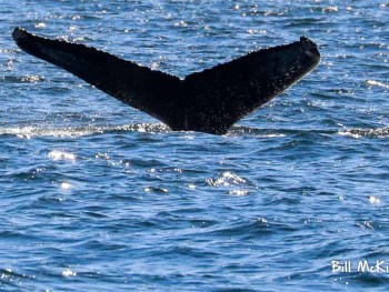 Jersey shore whale watch 2019 bill mckim