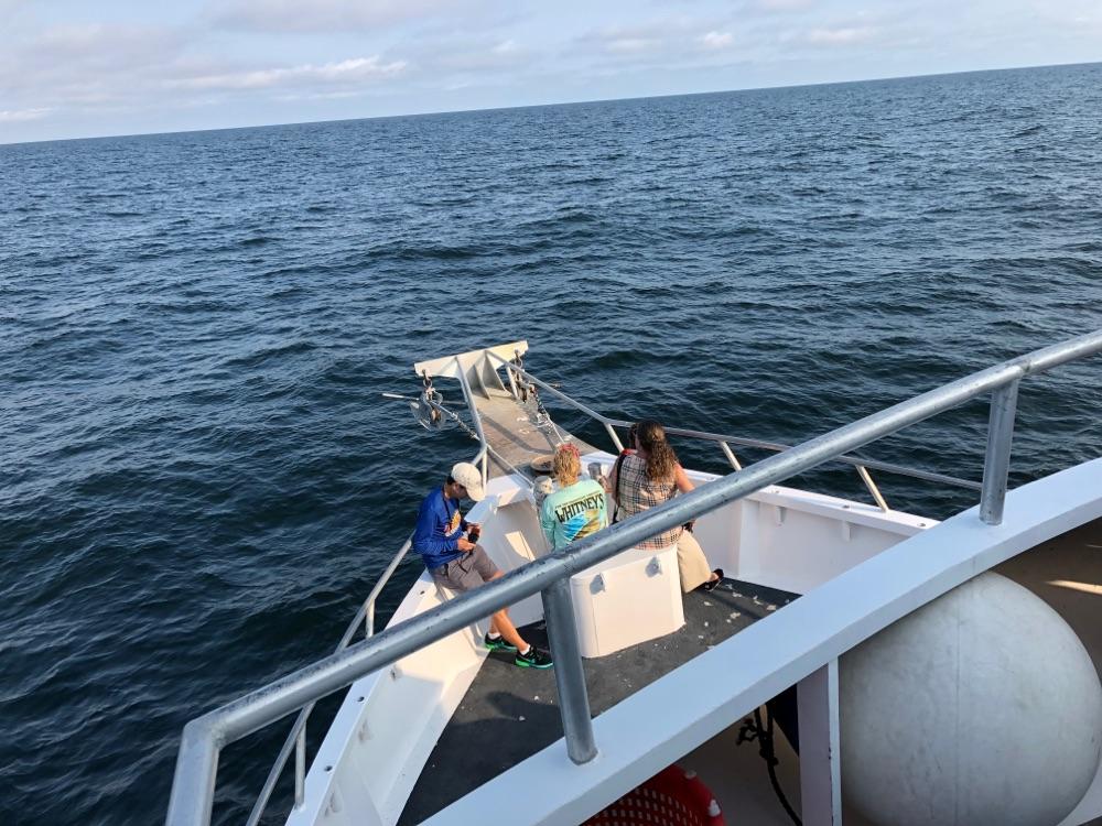 ersey shore whale watching tour Belmar nj 2019