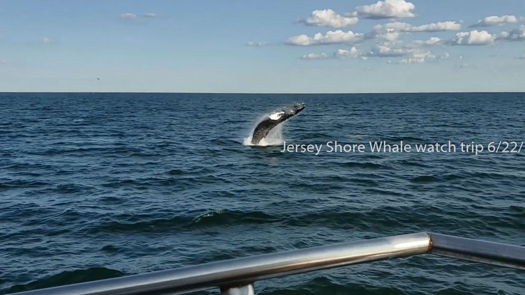 jersey shore whale watching tour