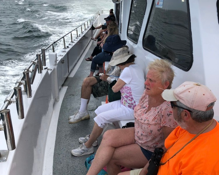 , Clean water more whales, Jersey Shore Whale Watch Tour 2020 Season