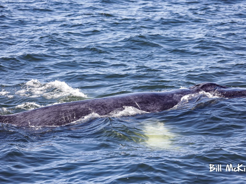 , Whale Watching Trip Report Belmar and Asbury Park NJ Sunday June 14th, Jersey Shore Whale Watch Tour 2020 Season