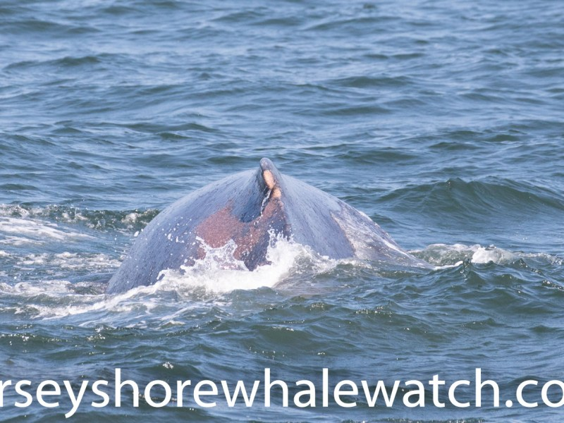 , Photos July 29 whale watching trip, Jersey Shore Whale Watch Tour 2020 Season