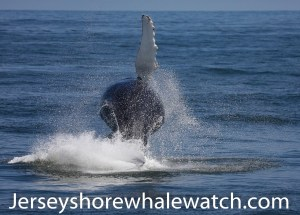 jersey shore whale watch 2020 photos