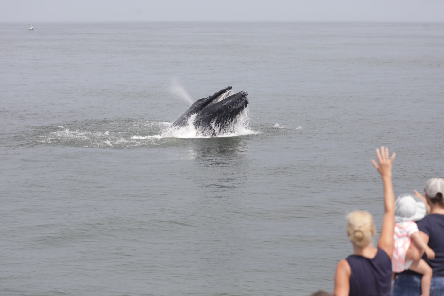 , Awesome weather awesome trip Friday, Jersey Shore Whale Watch Tour 2020 Season