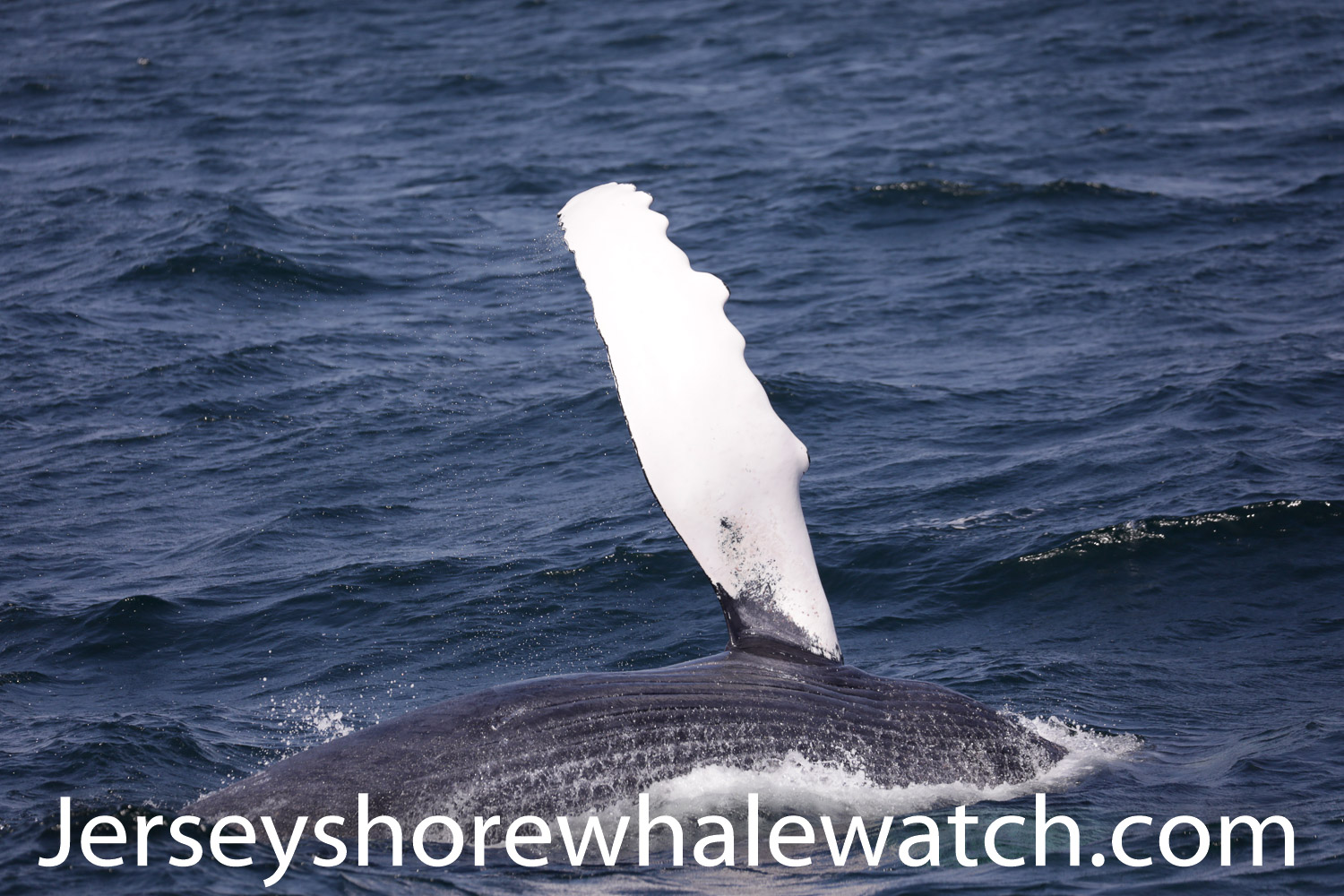 , We guarantee you will see a whale!, Jersey Shore Whale Watch Tour 2020 Season