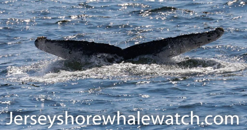Belmar whale watching tour august 2020