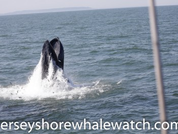 best east coast whale watching trip