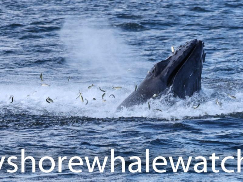 , Sept 6th photos Belmar whale watching tour, Jersey Shore Whale Watch Tour 2020 Season