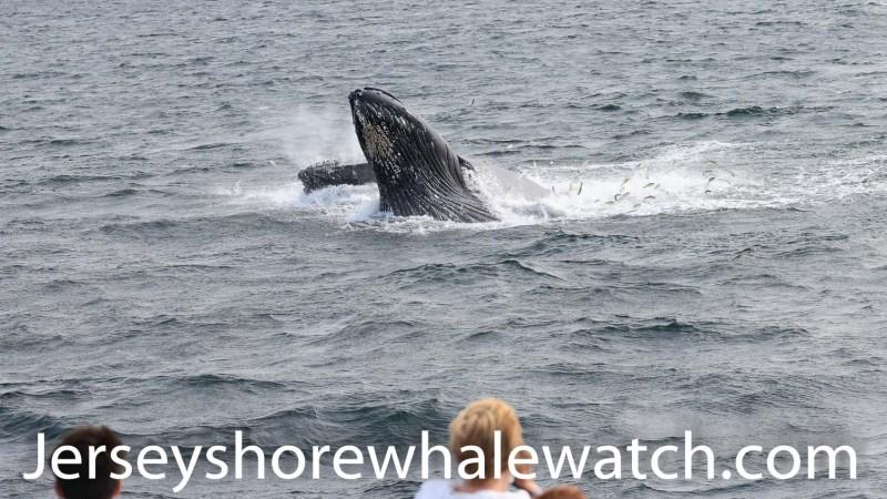 , whale watching trip 4 whales!, Jersey Shore Whale Watch Tour 2020 Season