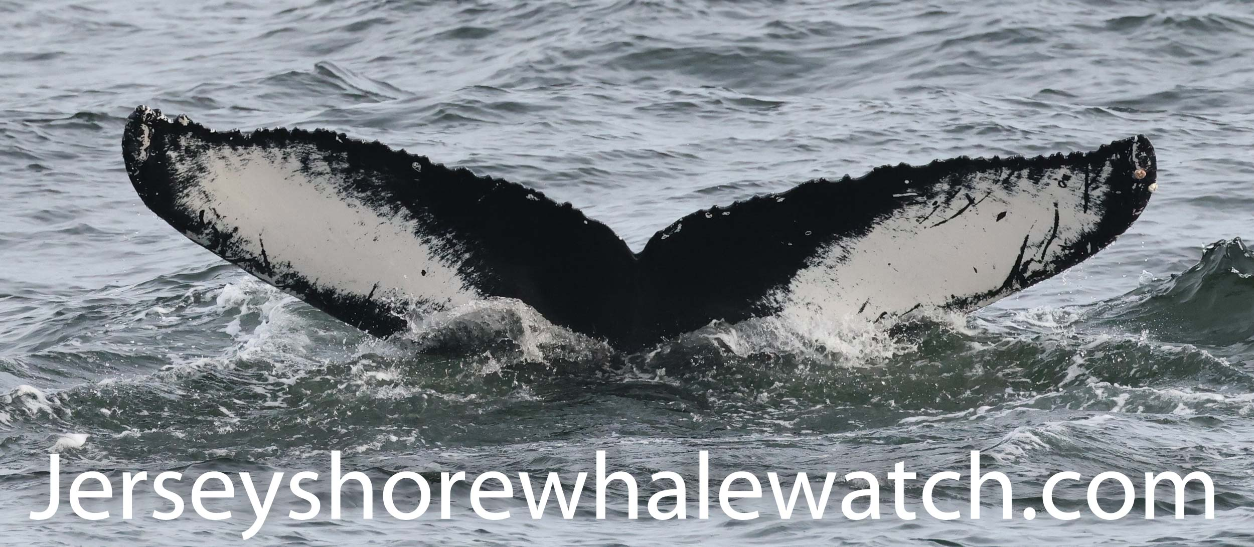 , Photos October 10th whale watching trip, Jersey Shore Whale Watch Tour 2020 Season