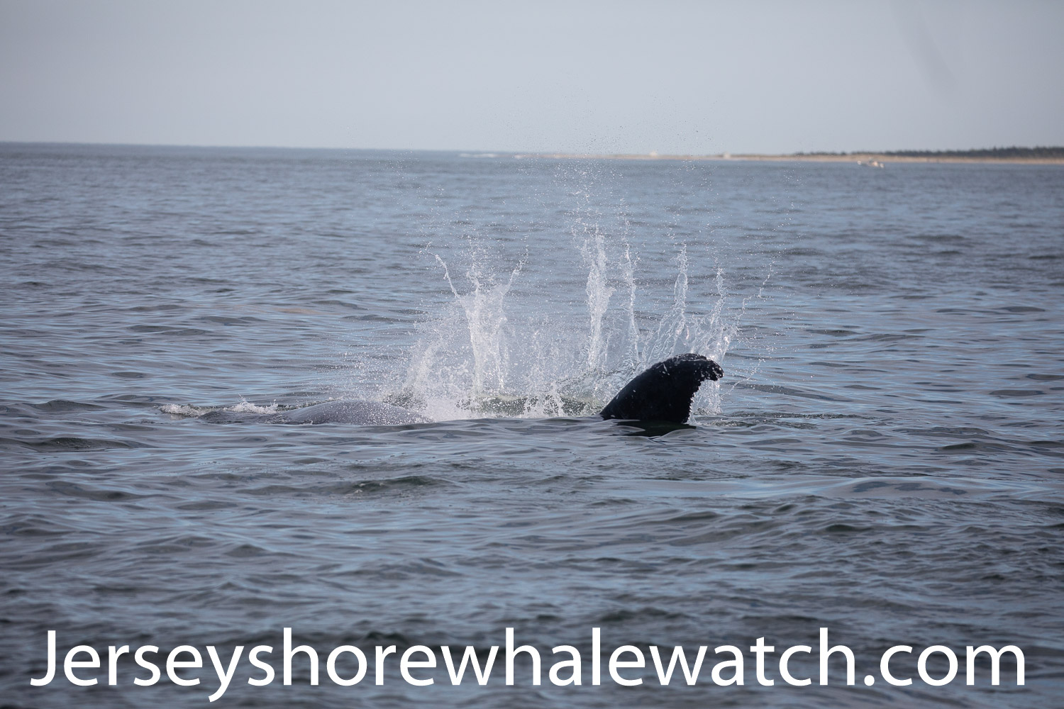 , Our first whale watching trip in 2018 photo, Jersey Shore Whale Watch Tour 2020 Season