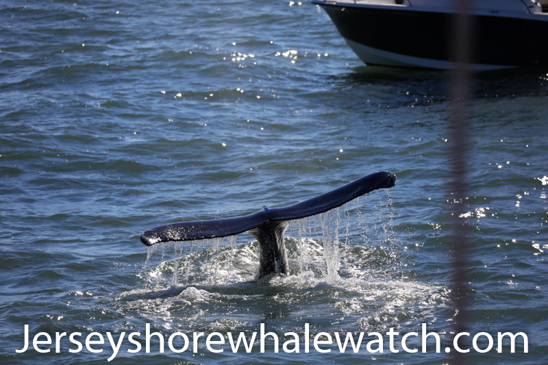 , whale watching in November New Jersey, Jersey Shore Whale Watch Tour 2020 Season