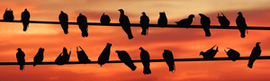 Birds of a feather. Image courtesy of stock.xchng®