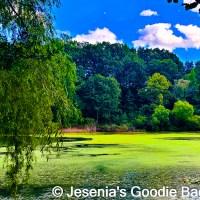 Bayside Blooms: Alley Pond Park Highlights