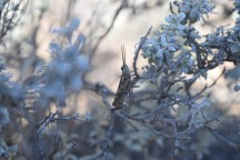 If you look closely, you'll see a tiny, horned grasshopper!