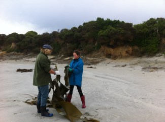 Seaweed gathering (for garden compost!), Taieri Mouth