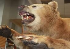 jessebrowns-charlotte-nc-bear