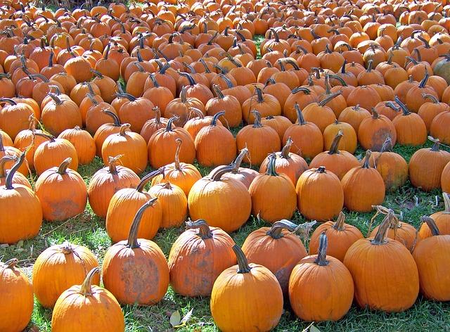 pumpkins-18111_640