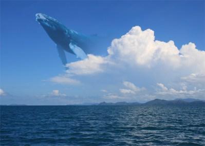 skywhales