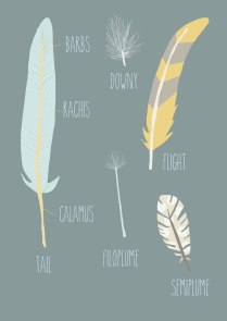 Feather Things